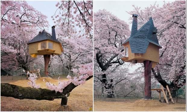 Сказочно красивый чайный домик на дереве «Tetsu» на острове Хокуто (Япония).   Фото: funtema.ru/ cacadoresdelendas.com.br.