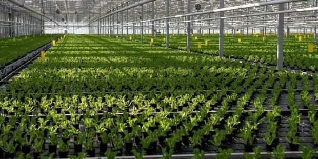 За рубежом вырос спрос на продукцию агропромышленного комплекса Москвы. Фото: mos.ru
