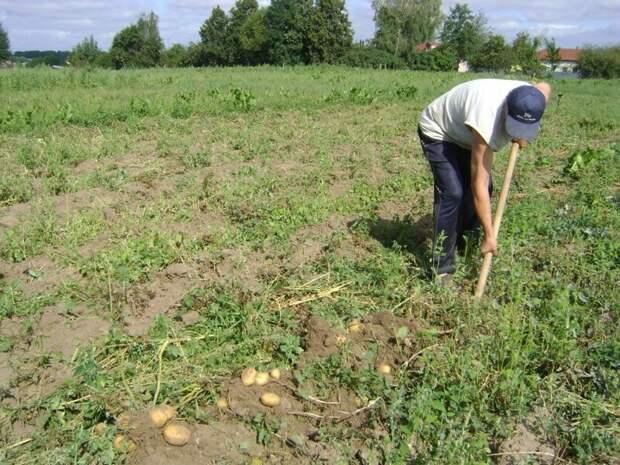 Почему выжить натуральным хозяйством в России нельзя! история, своими руками, факты