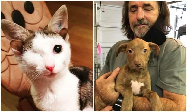 35 трогательных фото животных, которым подарили новую жизнь