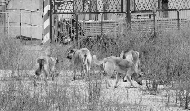 Стая собак набросилась на девочку в районе Карелии