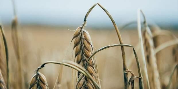 Казахстан теряет свою продовольственную независимость – сенатор