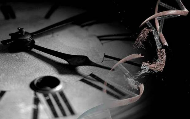 Продолжительность жизни можно предсказать по скорости генетических мутаций
