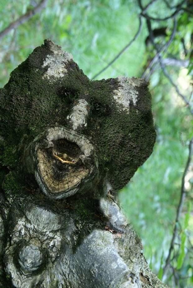 Превращение деревьев в сказочных персонажей мира фэнтези при помощи зеркального отражения