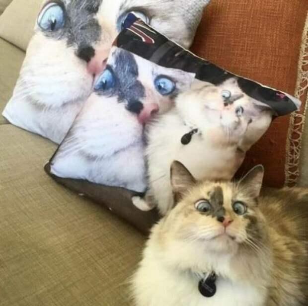 30 фотографий, доказывающих, что коты вездесущи