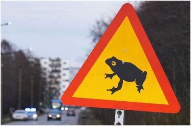 В Таллине открыли первый в мире «пешеходный переход» для лягушек