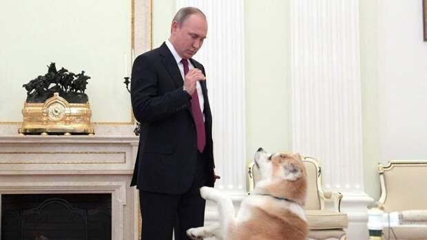 Путин инициировал подготовку проекта о ведении учета домашних питомцев