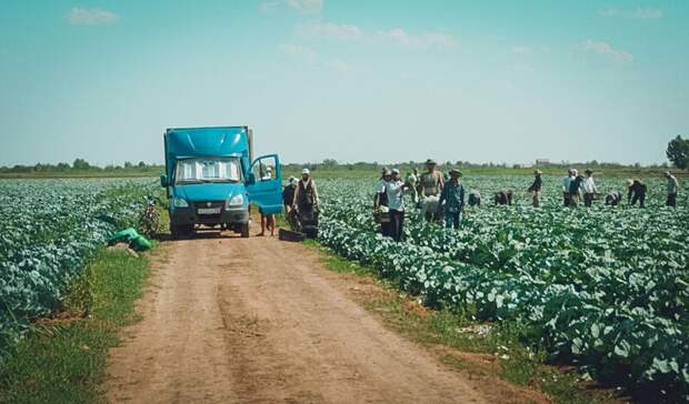Нелегальные мигранты и краденая вода: что нашла полиция в волгоградских теплицах