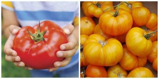 Биф-томаты