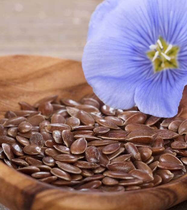 Семена льна: польза и вред, полезные свойства и противопоказания льняного семя, что оно лечит, как принимать, лечебные свойства употребления