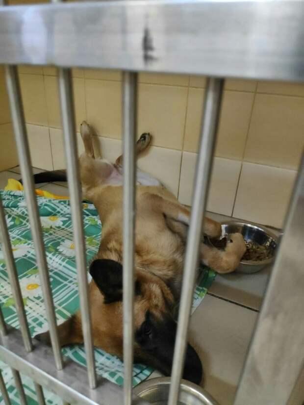 Собаку хозяин выбросил с 4-го этажа, но теперь она обрела новый дом и любящую семью