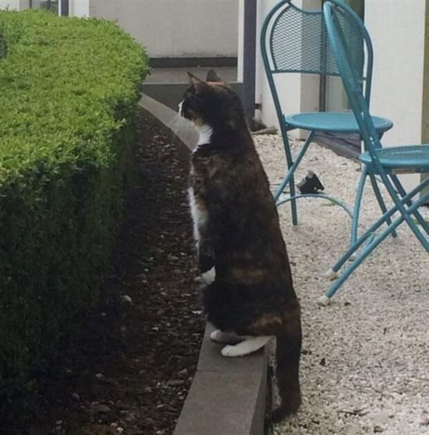 Каждый день котик приходит к дому соседей и приглашает любимую девушку на прогулку