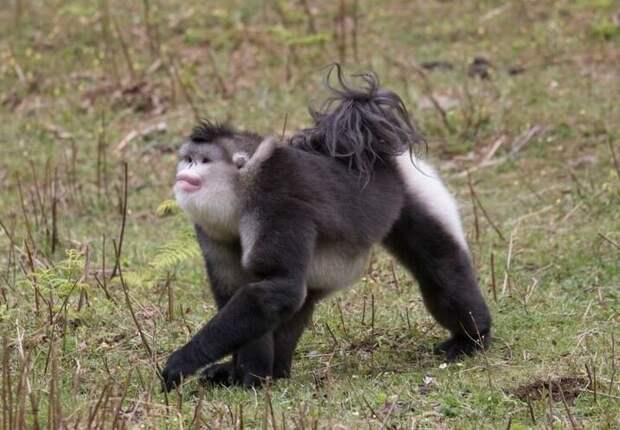 10 животных, которых создала природа в озорном настроении