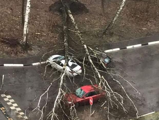 Движение оказалось полностью перекрыто на 15-й Парковой улице в Москве из-за упавшего дерева