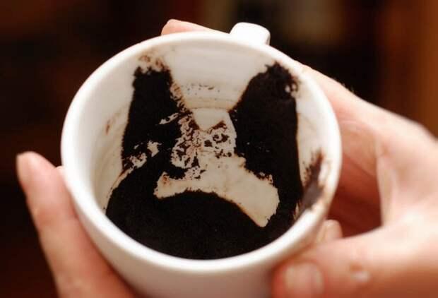 Вторая жизнь кофейной гущи
