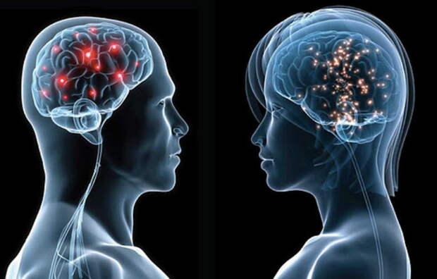 Нервная система после 40 лет нуждается в поддержке