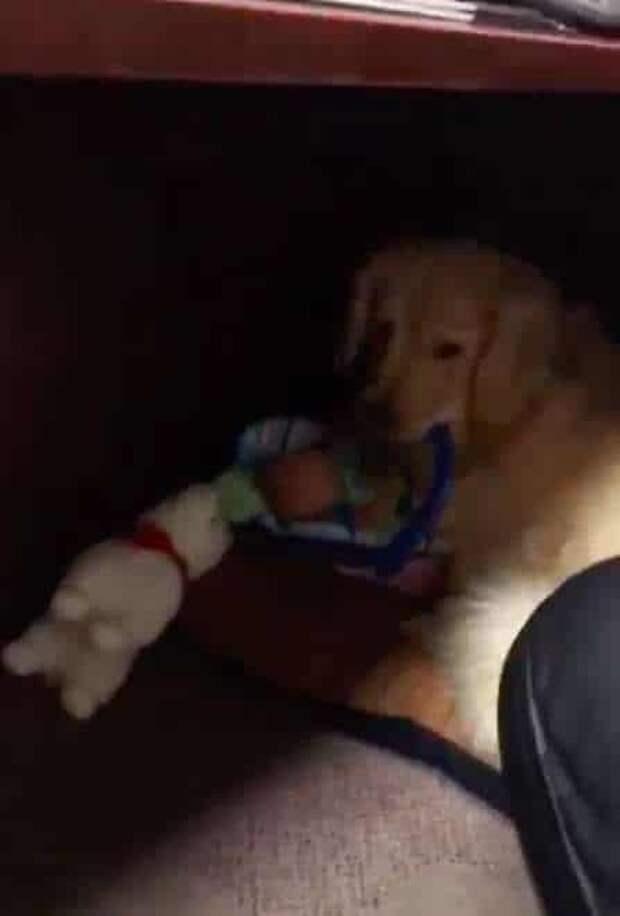 щенок с игрушками