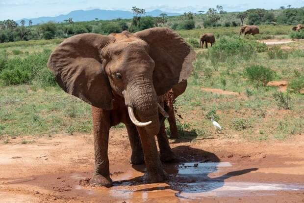 9 фактов о животных, которые удивят даже многих зоологов