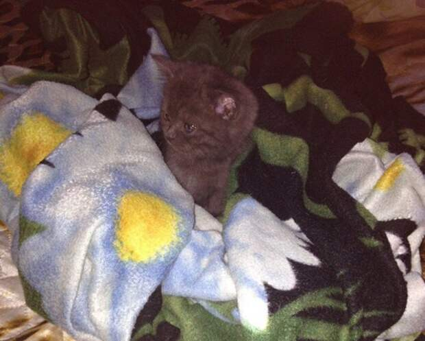 В Ростове студенты спасли котенка, балансирующего на карнизе 7 этажа