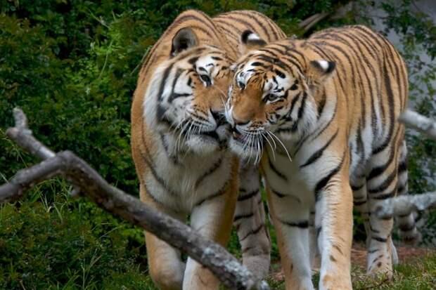 20 фото «целующихся» зверушек, которые украдут ваше сердце
