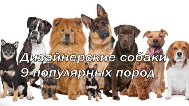 Дизайнерские собаки: 9 популярных пород
