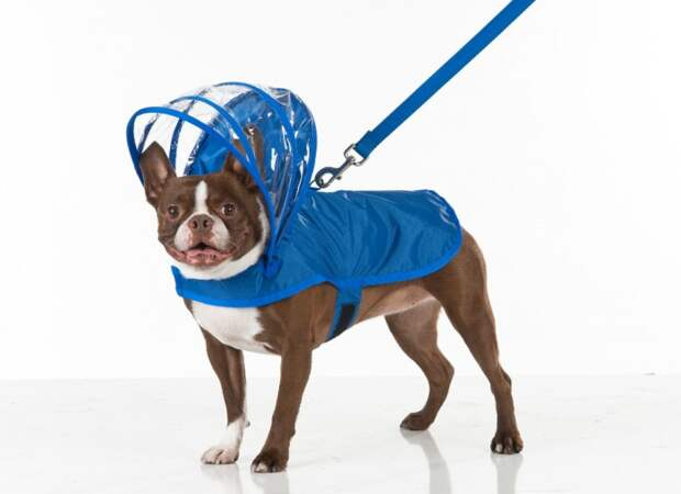dog_raincoat_umbrella_hood_01.jpg
