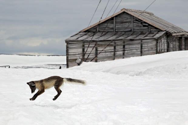 Гектар в Арктике выдадут быстрее, чем на Дальнем Востоке