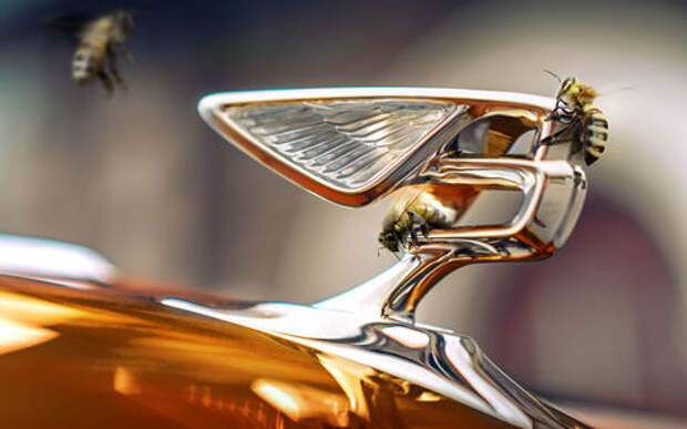 Bentley занялась производством меда
