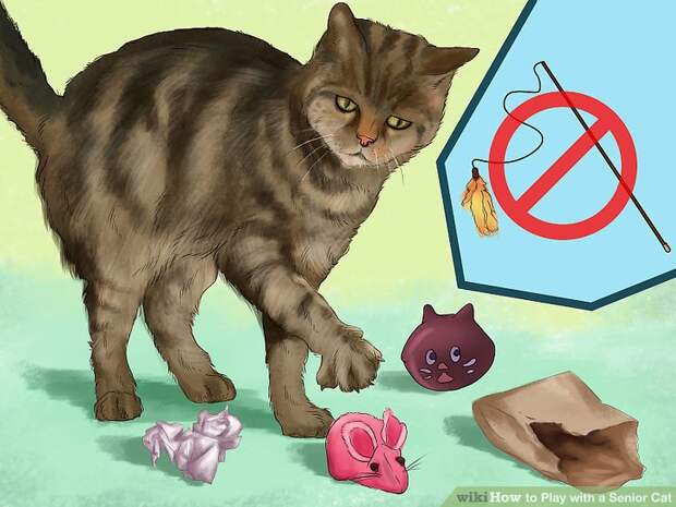 https://www.wikihow.com/images/thumb/b/b2/Play-with-a-Senior-Cat-Step-4.jpg/aid8013506-v4-728px-Play-with-a-Senior-Cat-Step-4.jpg