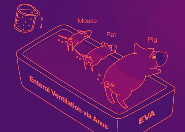 Анальная вентиляция помогла млекопитающим при дыхательной недостаточности