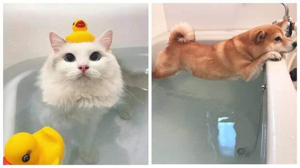 14 животных, у которых купание вызывает самые разные эмоции