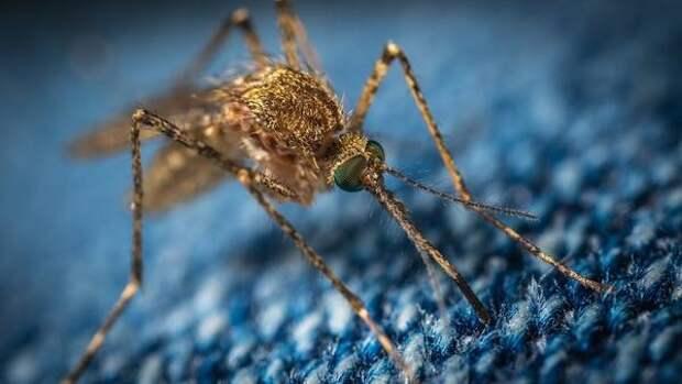 Исследователи разработали новую вакцину против вируса денге