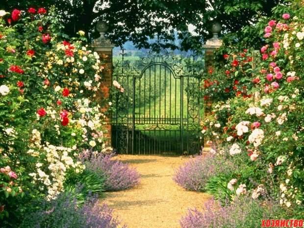 Сажаем сад так, чтобы и внукам досталось