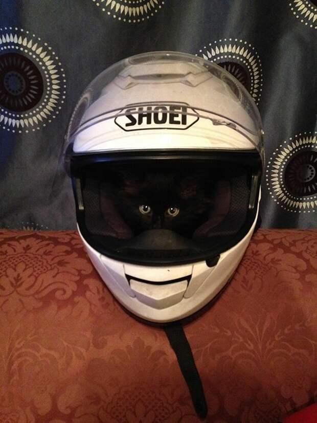 """1. """"Мой котенок обожает спать в шлеме моего парня"""" животные, забавно, забавные животные, кот, коты, кошки, приколы с животными, смешно"""