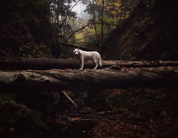 путешествие по США Джона Шторца и его собаки Вольфа (5)