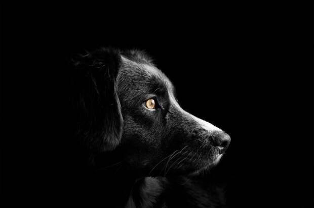 Собака напала на девушку со спины на Петрозаводской