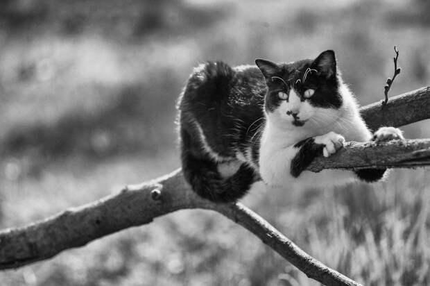 monorail_cats_photos_sabrina_boem_12.jpg