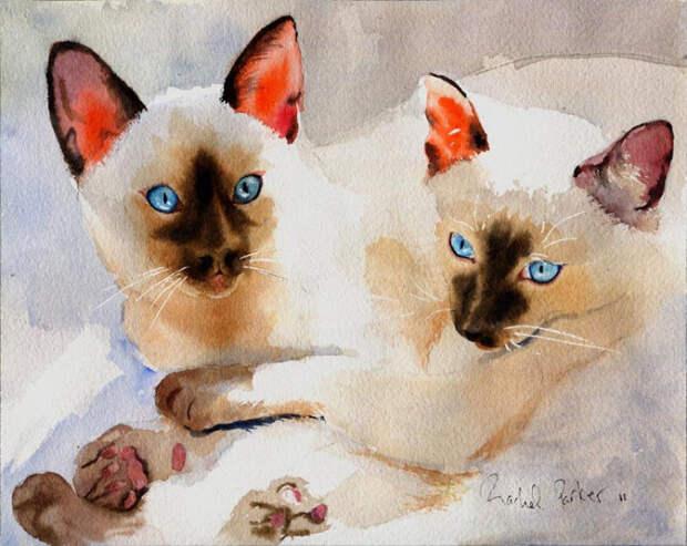 Голубоглазые красавцы. Автор: Rachel Parker.
