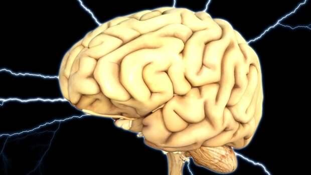 Биологи предупредили о влиянии коронавируса на клетки мозга