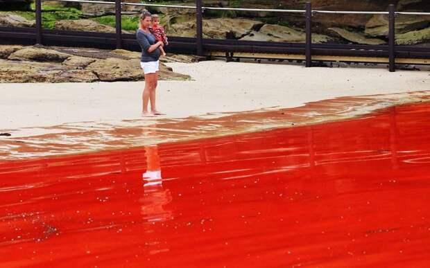krovavoaliokean 1 Вода на пляжах Австралии окрасилась кроваво красным, напугав отдыхающих