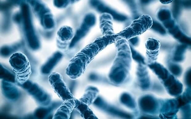 26. Из-за наличия двух Х-хромосом, у женщин реже проявляются осложнения и хронические болезни. женщина, интересное, тело, факты