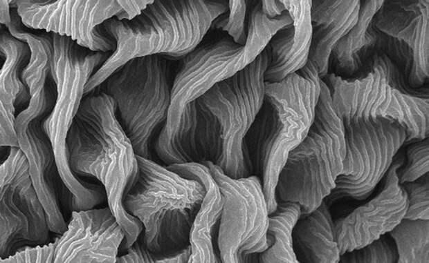 Вселенная под микроскопом