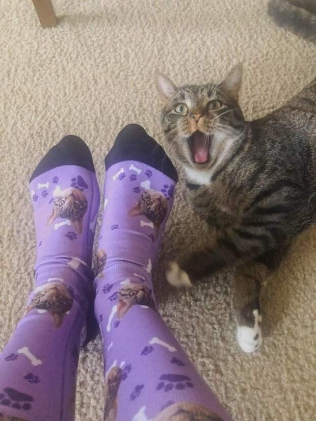 Кошки, которые заставят вас улыбнуться!