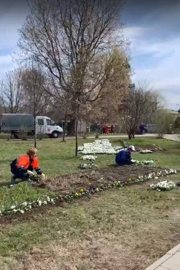 Фото дня: на Церковной горке высадили цветы