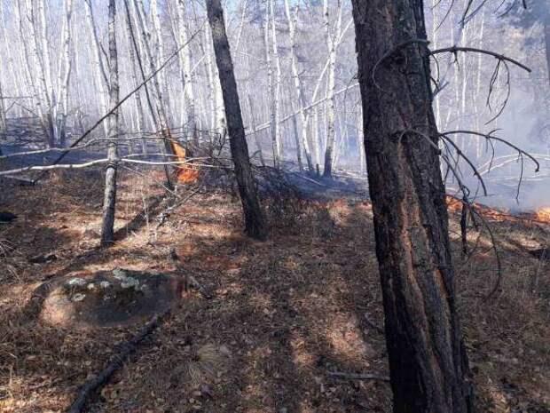 Один лесной пожар случился в Красноярском крае за минувшие сутки
