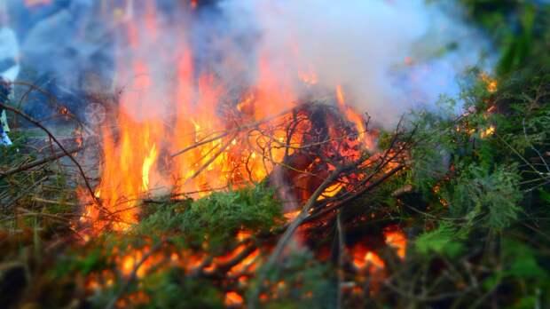 Количество лесных пожаров в России сократилось на 5,1 тыс. га за сутки