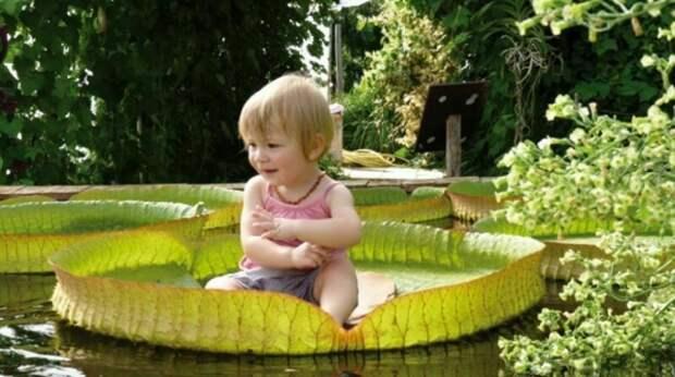 4 самых необычных места на планете, где выращивают растения