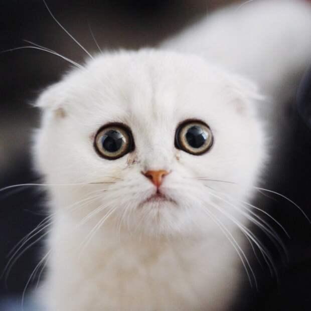 Простите-извините! Этот котенок всегда выглядит так, будто очень сожалеет о чем-то животные, котенок