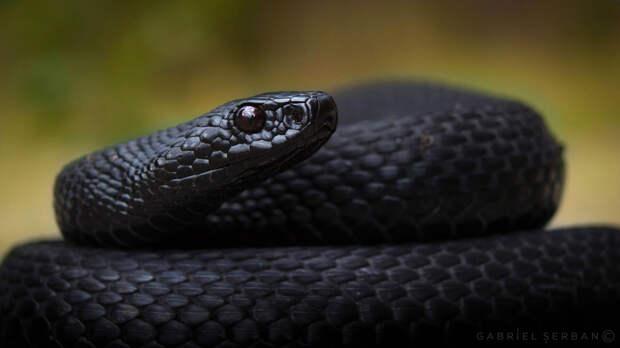 Змеиный яд подавляет размножение коронавируса и его проникновение в клетки организма