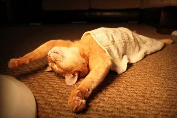 О чем говорит поза, в которой спит ваша кошка